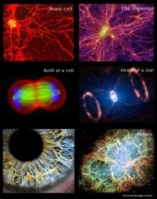 brain cell and universe